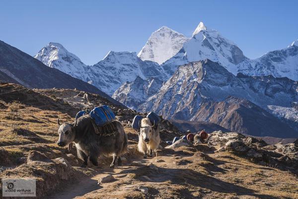 Everest Base Camp Trek | April 2020