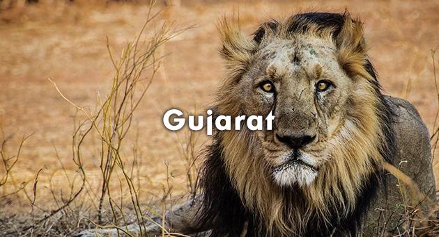 Gujarat Quiz